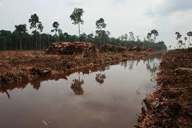 Les humains ont déjà détruit la moitié de la biomasse sur Terre